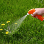 What are the Best Dandelion Killers?
