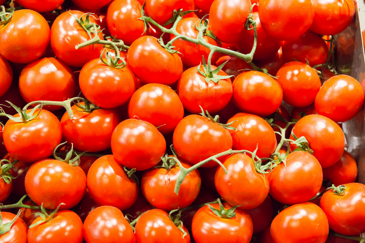 Best Fertilizer for Tomatoes