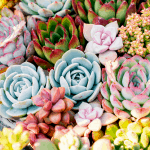 How to Make the Best Soil for Your Succulents?