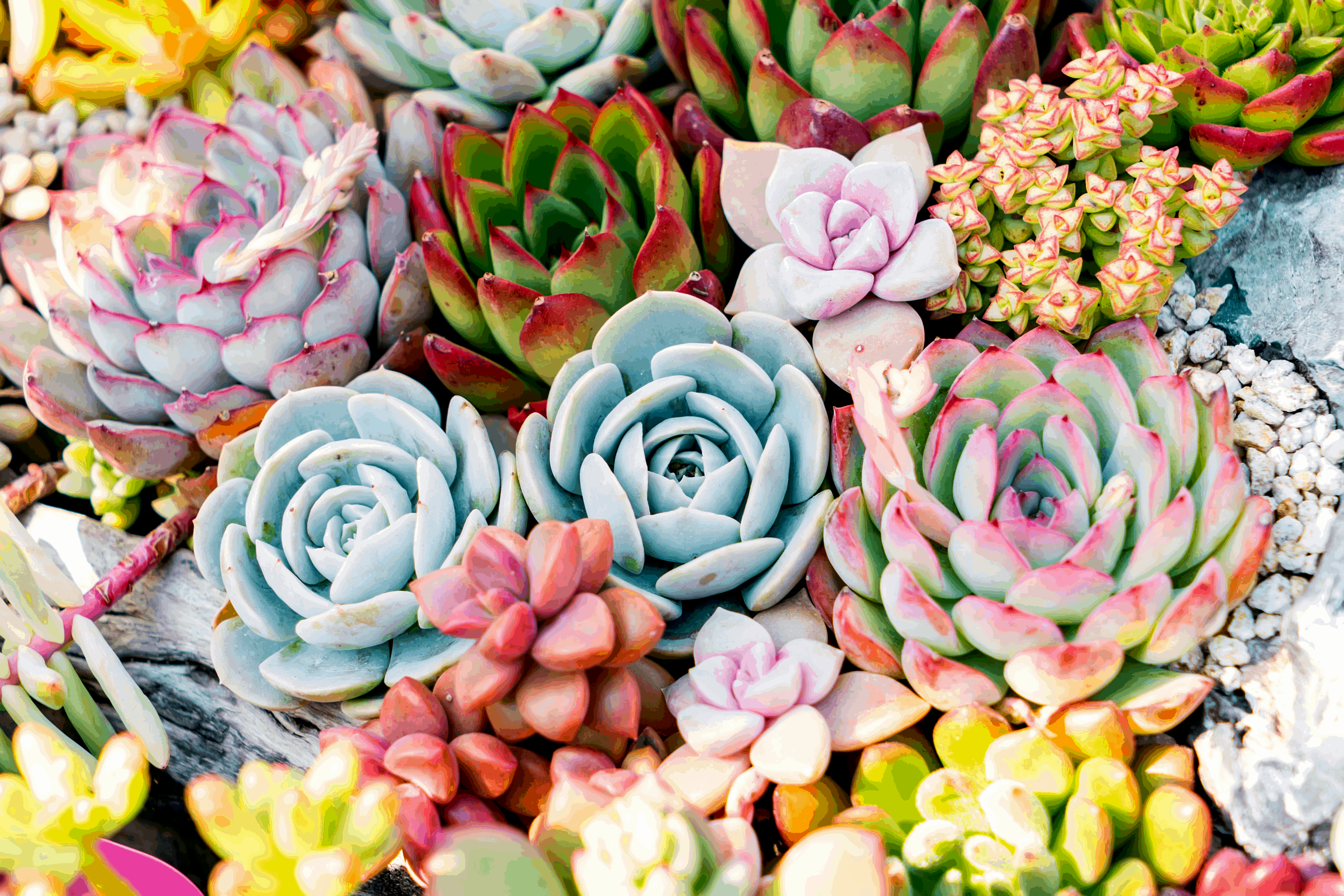How to Make the Best Soil for Your Succulents