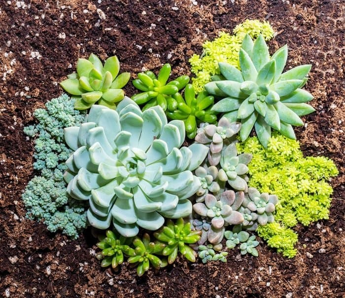 Importance of Good Soil for Succulents