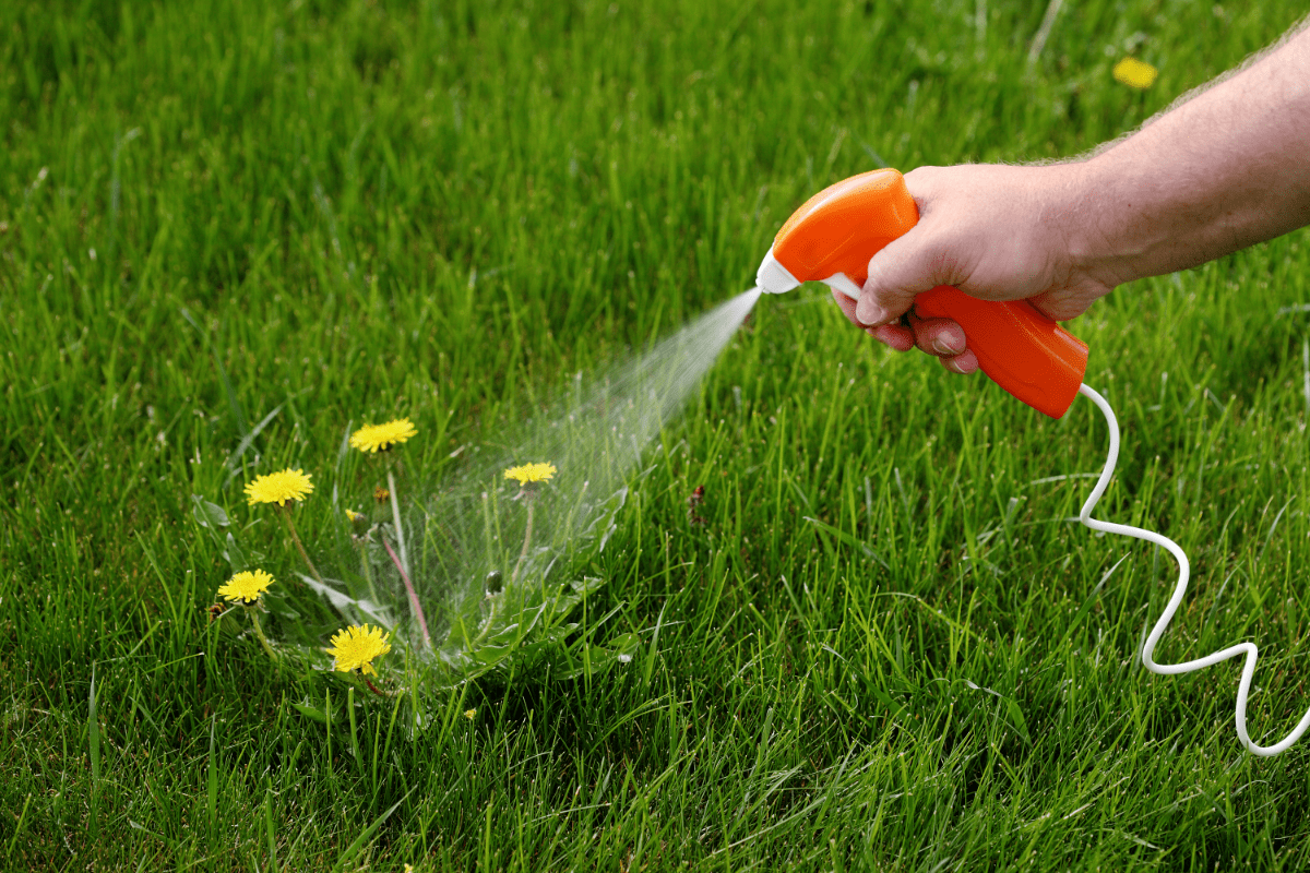 What Are The Best Dandelion Killers