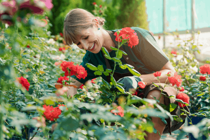 Best Time to Plant Roses: What to Plant and Where to Plant