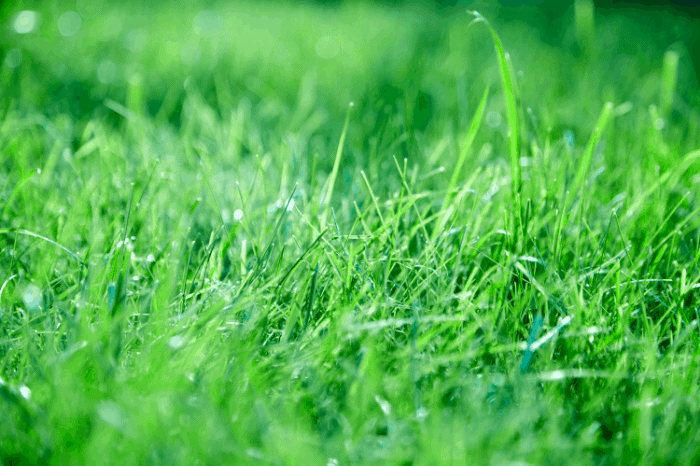 grass that grows in shade