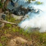 A Potent Combination: The Best Way to Get Rid of Mosquitoes