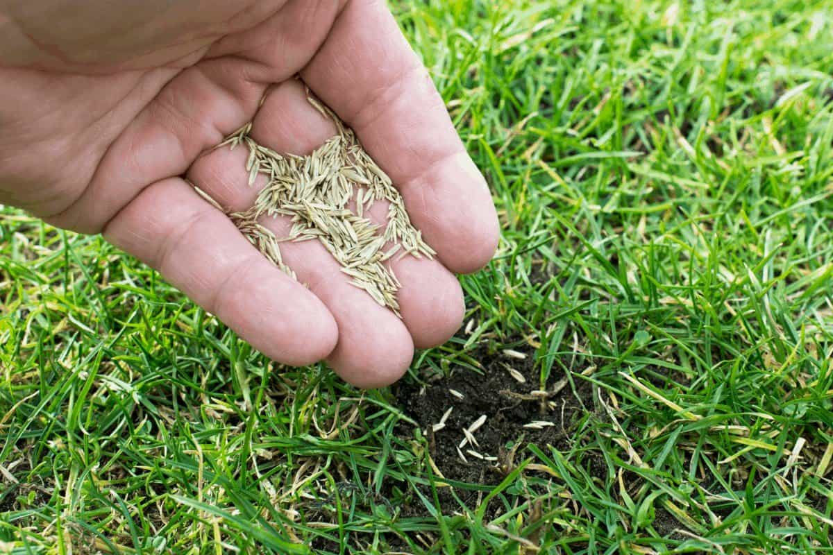 Best Time to Seed Lawn