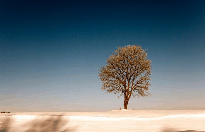 Best Time to Transplant Trees: Winter