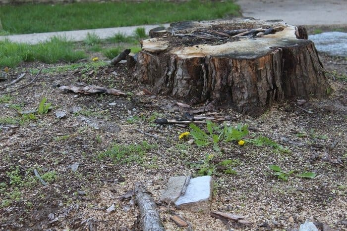 How to Stop Tree Stump From Sprouting: Here Are Different Ways