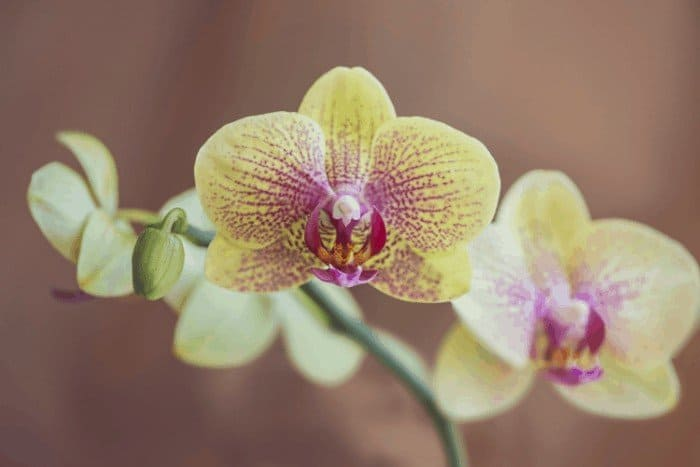 How to Care for Orchids After Blooming: Know Your Orchid