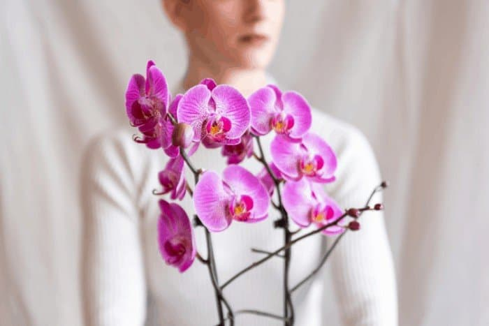 How to Care for Orchids After Blooming: Orchid As a Medicinal Plant