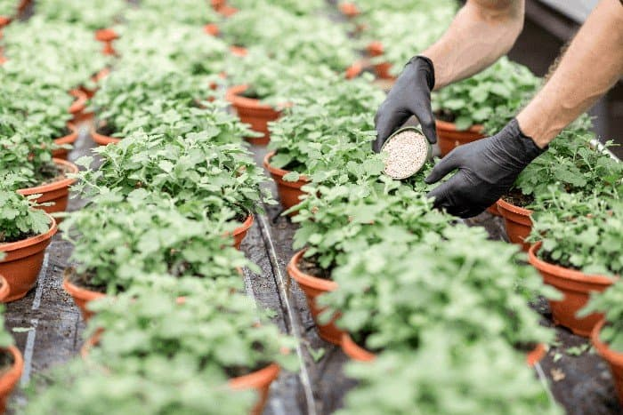 Why Your Plant Seedlings Are Turning Yellow