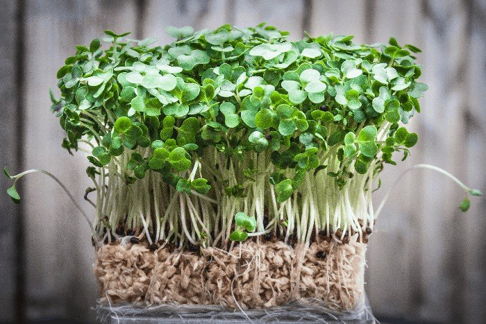 How to Grow Watercress from Cuttings