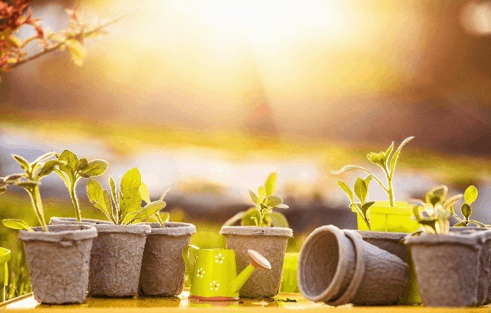 How to Grow Watercress Step 4: Prepare the Media (Pot or Container)