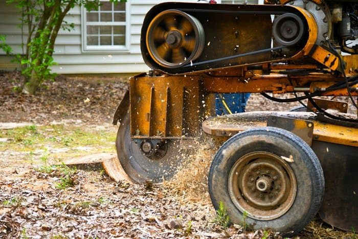How to Stop Tree Stump From Sprouting: Use a Stump-Killing Herbicide