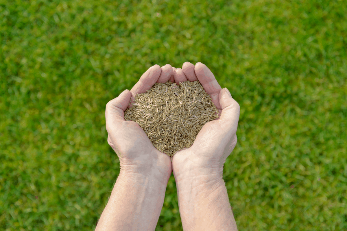 The Best Grass Seed to Plant in Florida
