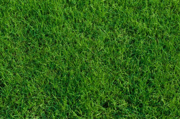 Selecting the Best Grass for Your Florida Home