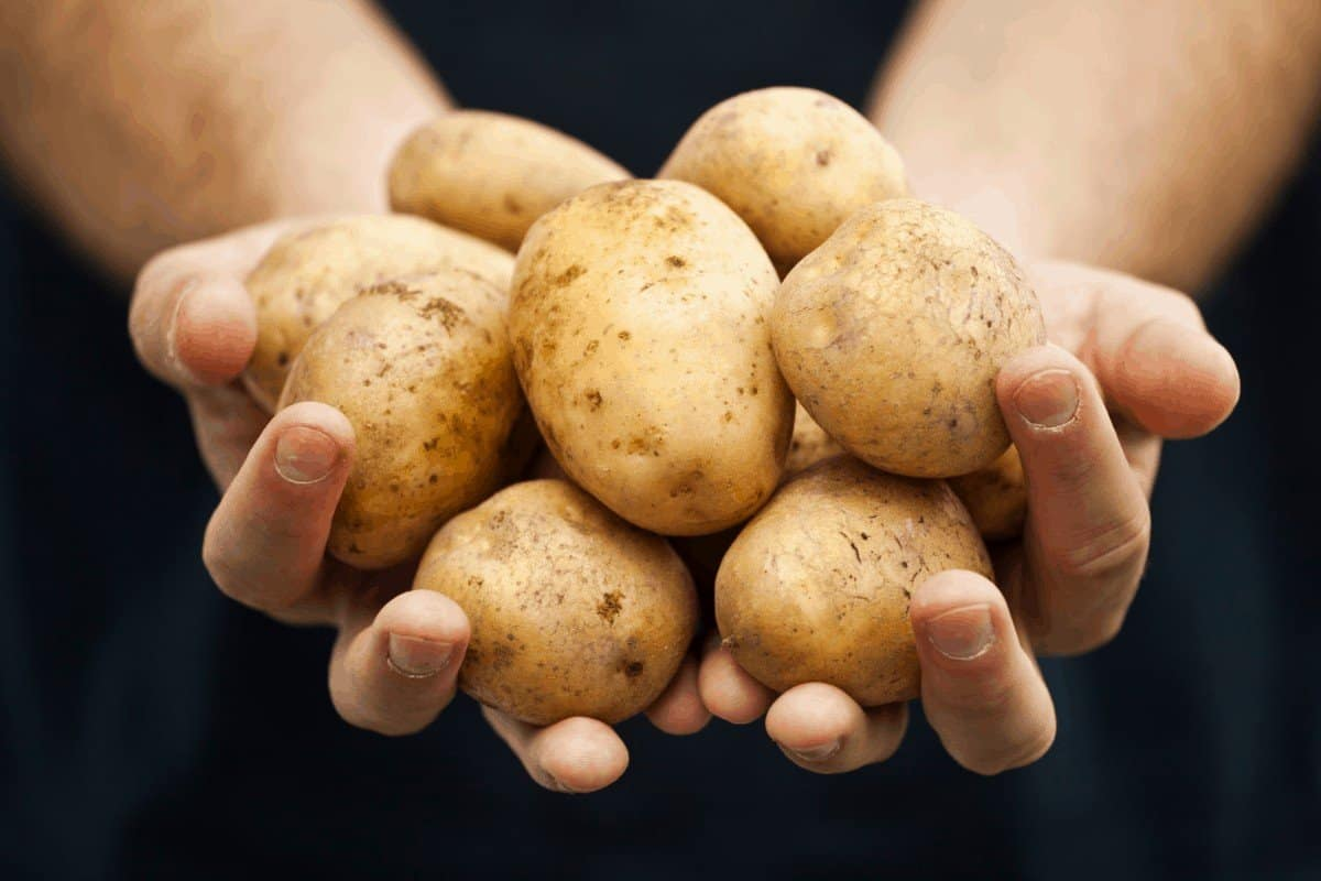 The Ultimate List of Determinate and Indeterminate Potatoes