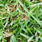 What is the Best Fertilizer for St. Augustine Grass?