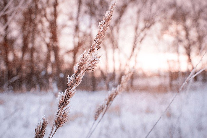 Protect Plants from Frost: Protecting Your Plants in Winter