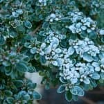 What To Cover Plants With From Freezing Temperatures