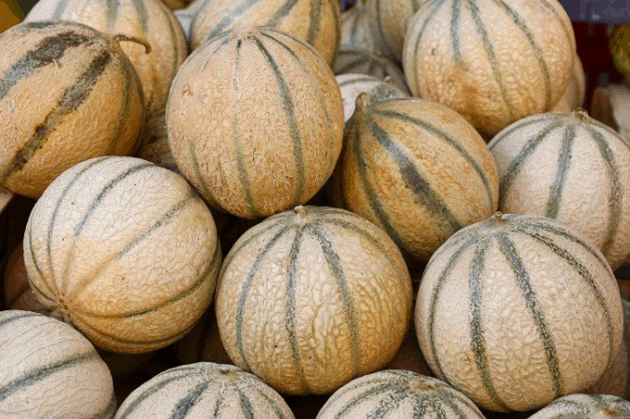 When To Harvest Cantaloupe- Factors To Consider