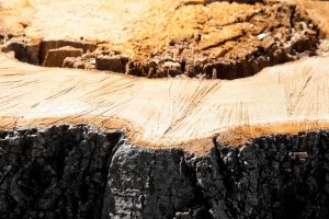 How to Stop Tree Stumps from Sprouting
