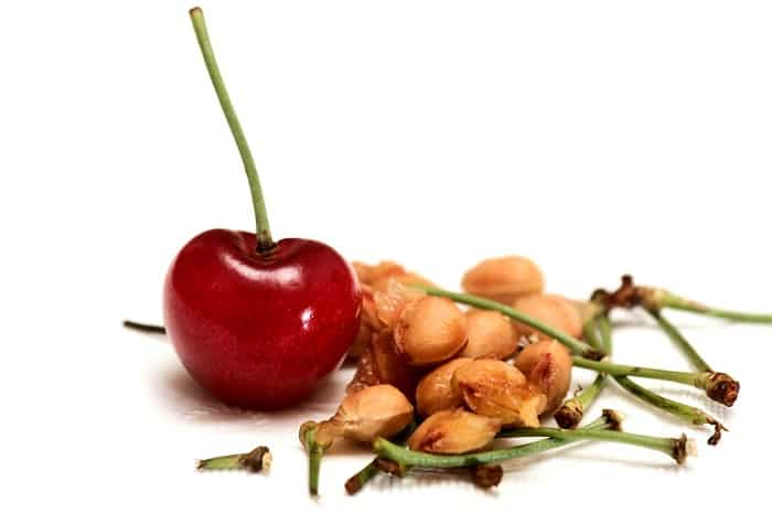 How to Plant Cherry Seeds from a Pit