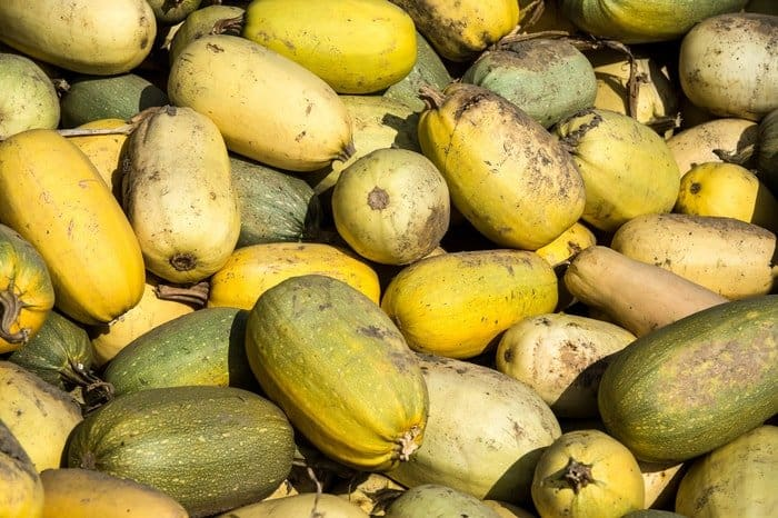 When to Harvest Spaghetti Squash: Check the Skin for Blemishes