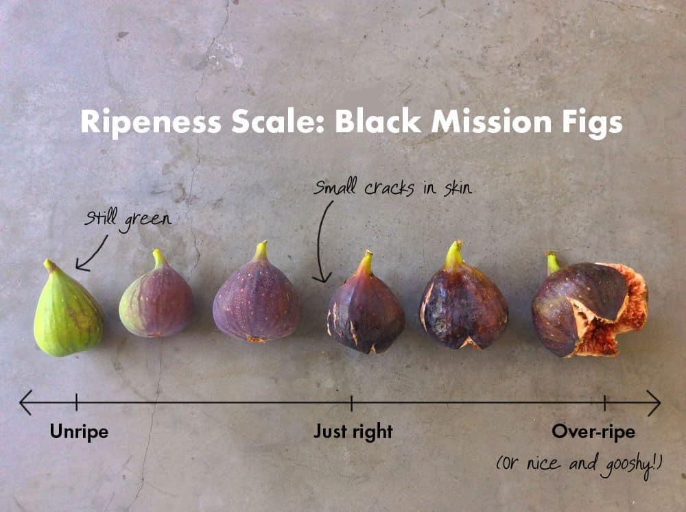 How to Tell if Your Figs Are Ripe?