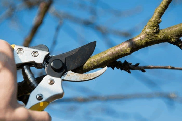 The Following Steps Below Is a Guide on How to Grow a Cherry Tree from a Branch