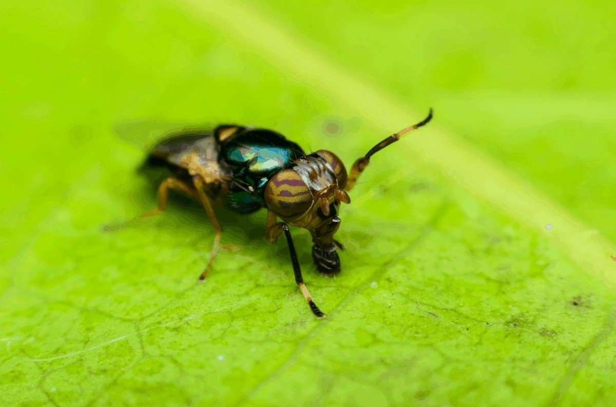 A Guide to Eliminating Hoverflies
