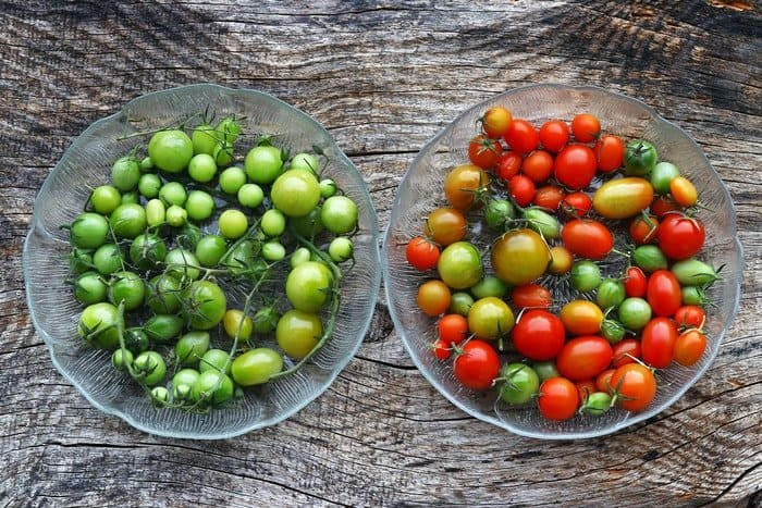 Why Aren't my Tomatoes Turning Red: How to Ripen Off the Vine
