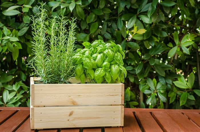 What Herbs Can Be Planted Together: Essentials