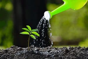 How Often Do You Need to Water Newly Planted Trees