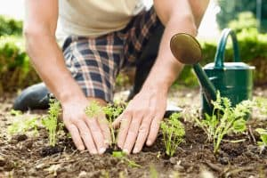 How to Break Down Clay Soil Fast