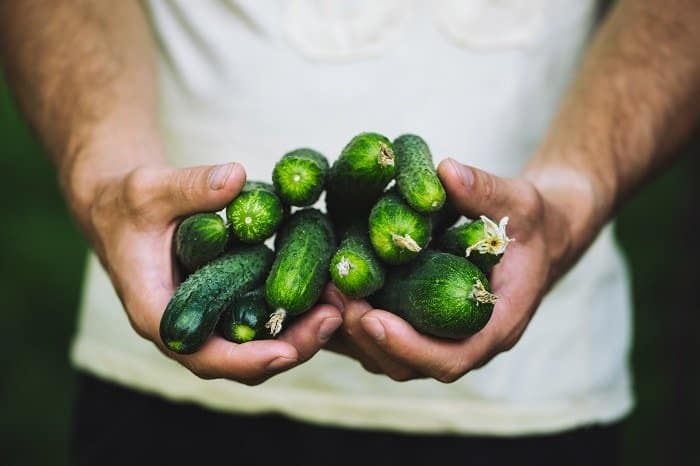 Tips on When to Pick Cucumbers - Size