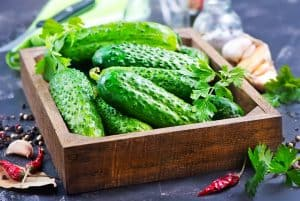 When Are Cucumbers Ready To Pick