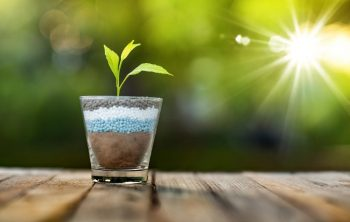 What Does Phosphorus Do For Plants