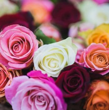 What Is The Best Fertilizer for Roses In 2020