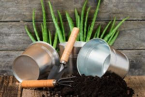 Best Potting Soil For Aloe Plants