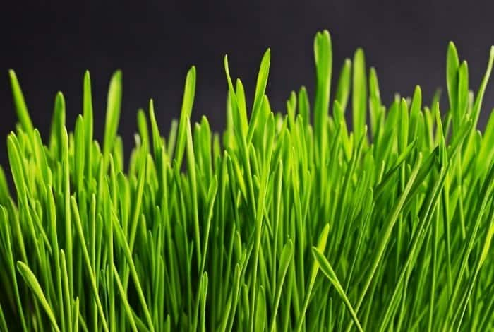 How To Turn Yellow Grass Green Fast