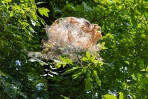 How to Get Rid of Sod Webworm