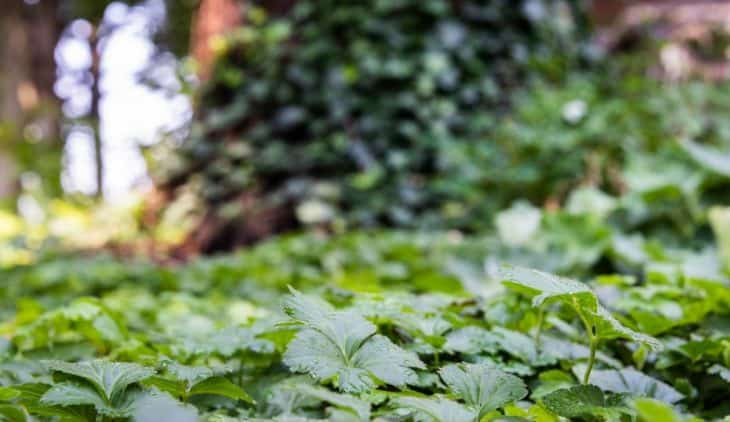 The Best ground Cover for Shaded Areas That Stay Green through the Year