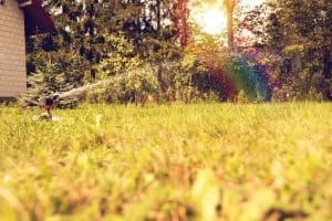 What Causes Grass to Turn Yellow & How To Turn It Green