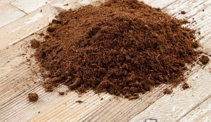 What Is Sphagnum Peat Moss And How To Use It