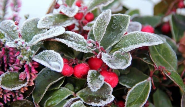 At What Temperature Does Frost Occur on Plants