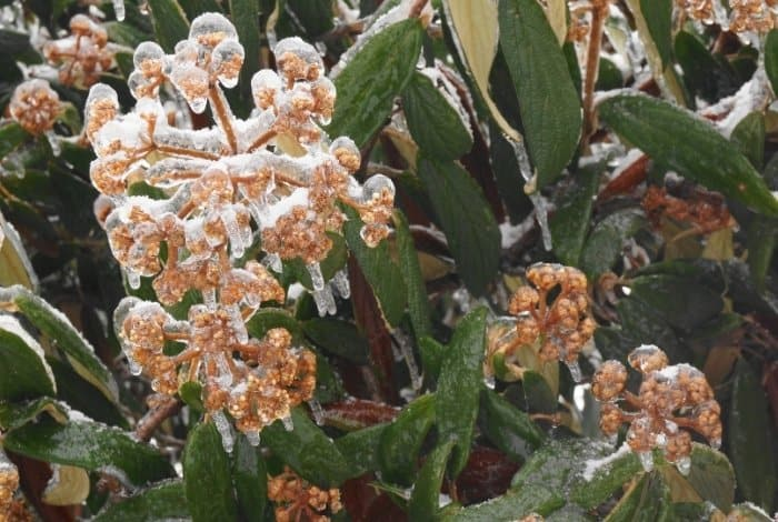 Frost and What It Does to Plant - At What Temperature Does Frost Occur on Plants