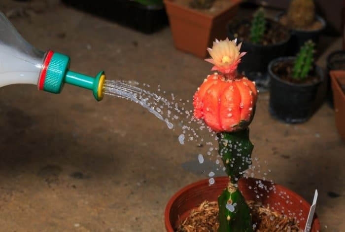 Know-How Often You Should Water a Cactus