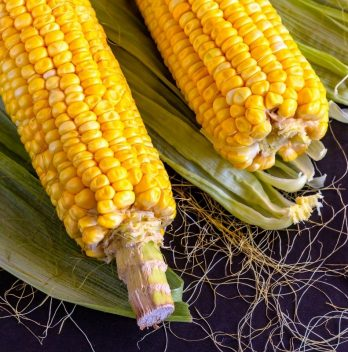 When is Sweet Corn Ready to Pick