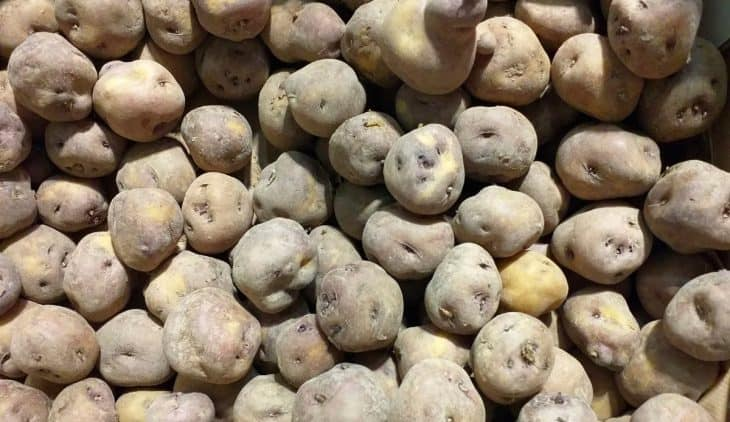 Kennebec Potatoes - A Guide On How To Grow